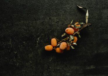 Rokitnik – roślina o dużym potencjale zdrowotnym.